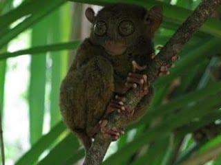 Tarsiers & Chocolate Hills: Exploring Bohol