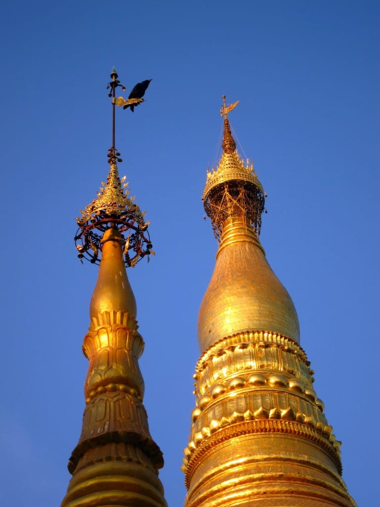Bird atop a zedi in shwedagon pagoda burma