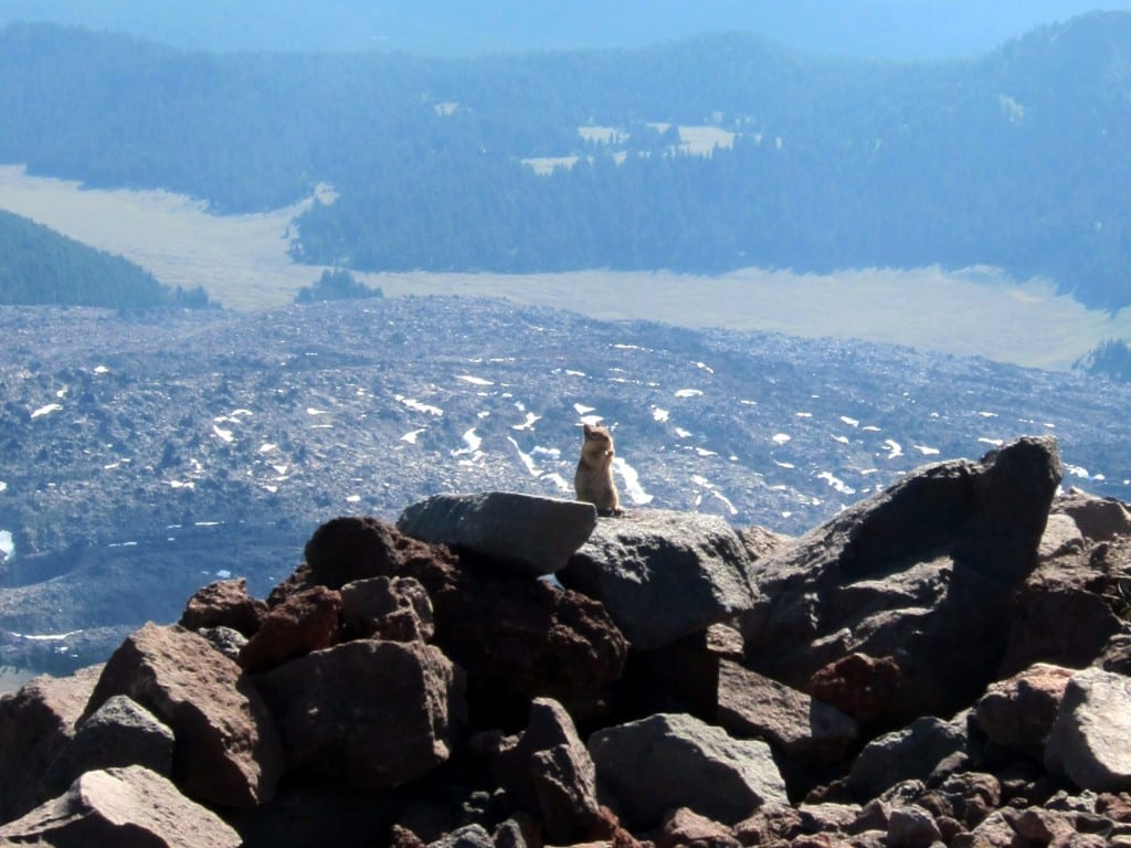 Friendly chipmonk on South Sister