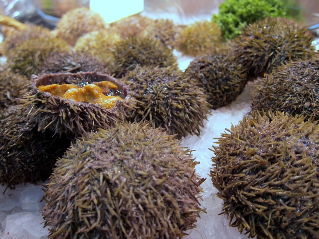 Fresh sea urchins at Paris' Convention market.