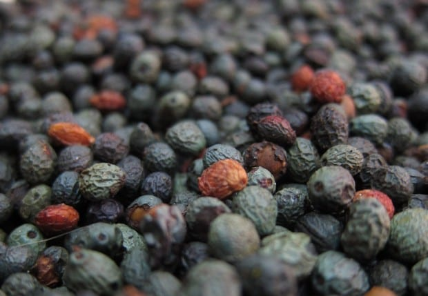 Peppercorns from Jordan