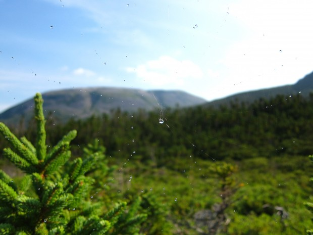 Gros Morne National Park though a spider's web