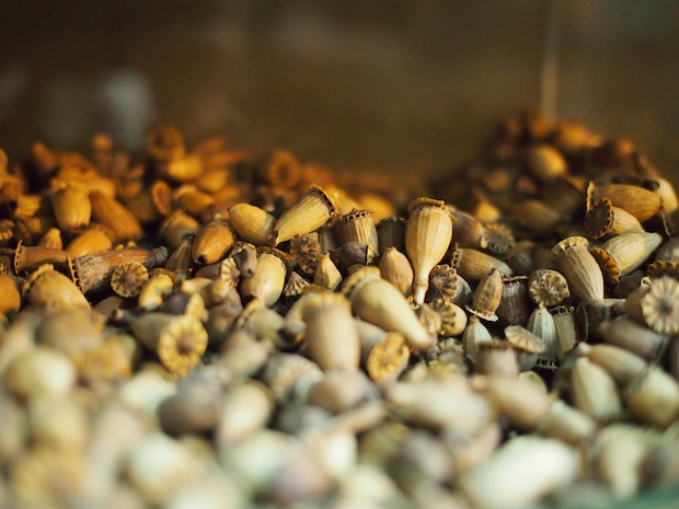 Small acorns for sale in the Meknes spice market