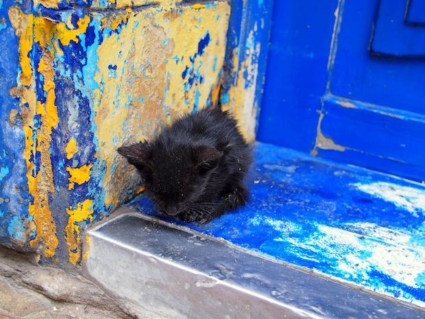 Kitten in Essaouira, Morocco