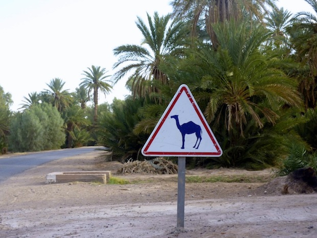 Driving in Morocco: camel crossing sign