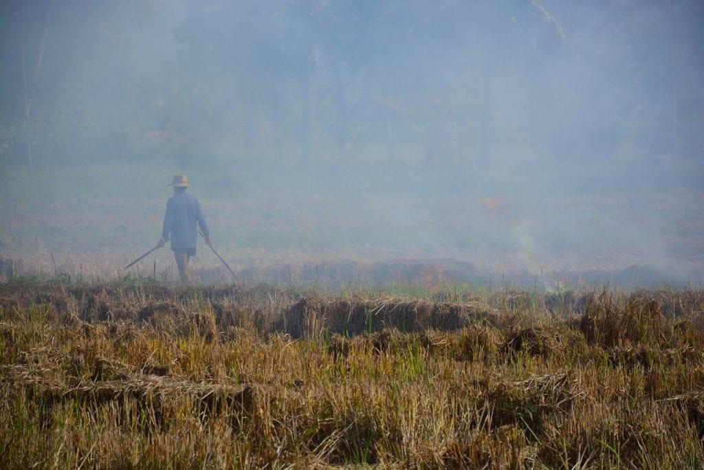(c)Paul Arps | Slash And Burn Northern Thailand