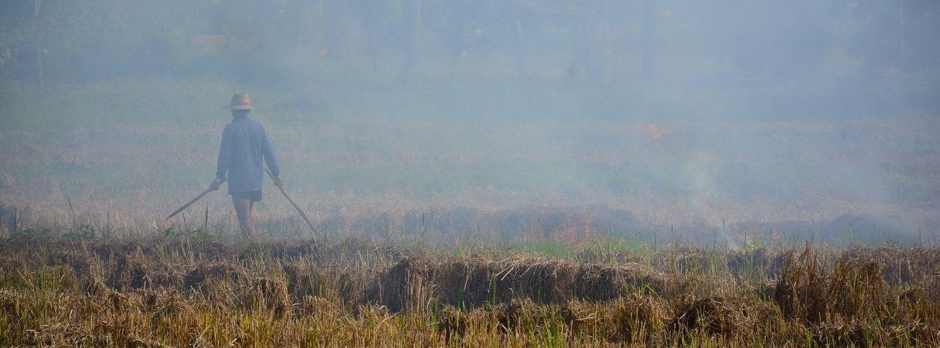 (c)Paul Arps   Slash And Burn Northern Thailand