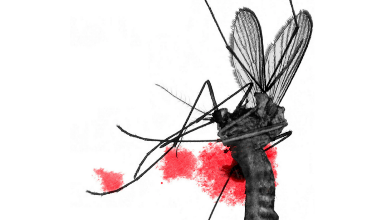 What Not To Do When You Get Dengue: Symptoms, Treatment, & More