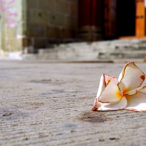 frangipani oaxaca