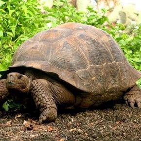 csf leak update be the tortoise